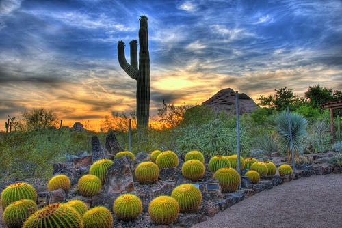 Best Routes To AZ Desert Botanical Garden